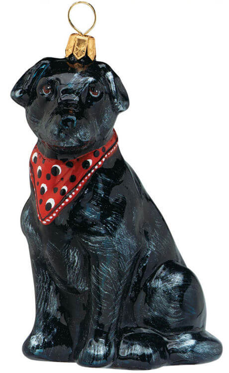 Labrador Retriever Black w/ Bandana