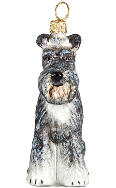 Schnauzer with Flop Ears - Gray
